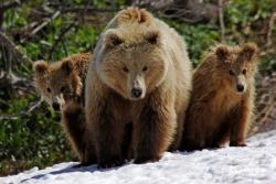 Охота на медведей. Время безоговорочного доверия к власти безвозвратно прошло
